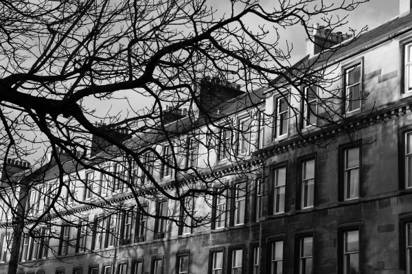 Terraced flats and a leafless tree